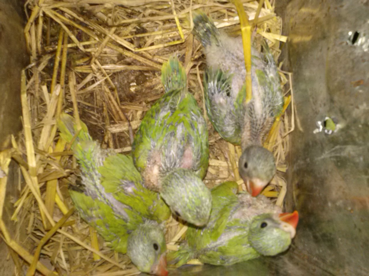 African Grey Parrot Baby Price In Pakistan