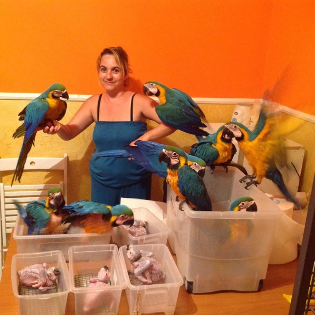 Pets Pakistan - Talkative and Well Tamed Parrots And Parrot Fertile