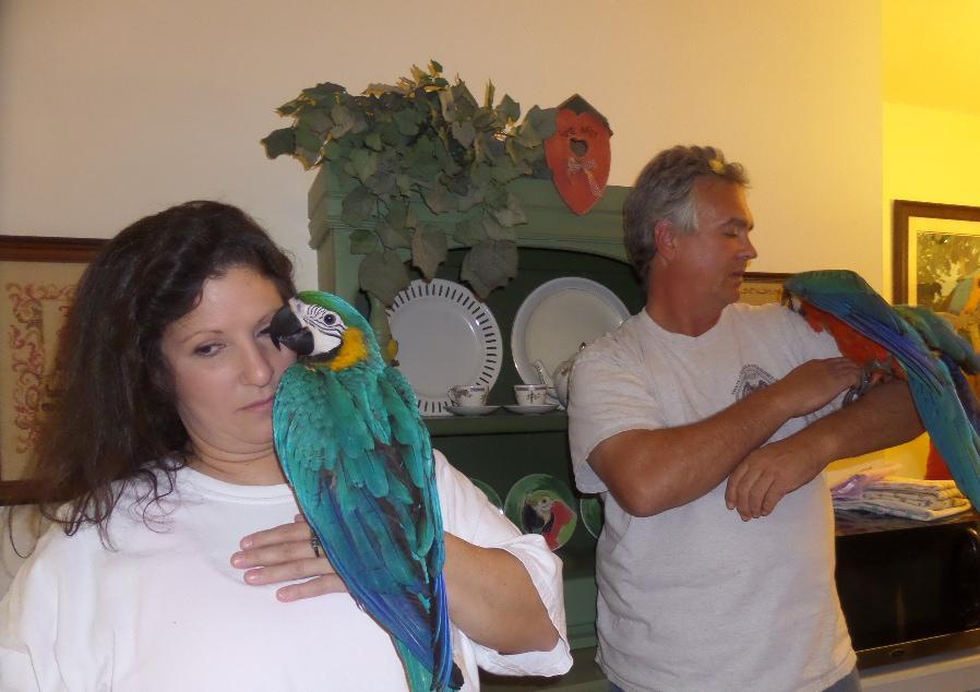 Pets Pakistan - cockatoos ,amazon,african grey,macaw