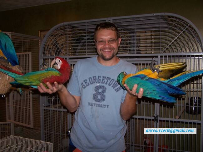 Pets Pakistan Parrots For Sale With Macaws And Eggs