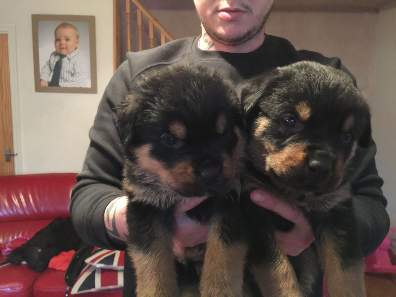 Pets Pakistan - Lovely Rottweiler Puppies for sale
