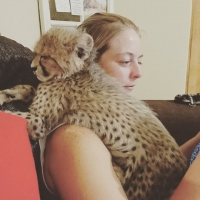 well-trained-cheetah-lion-cubs-for-sale-bengal-islamkot