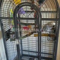 talkative-african-grey-parrots-available-for-rehoming-african-grey-parrot-hyderabad