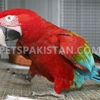 Pets Pakistan - Search Pets