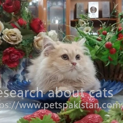 Research about cats