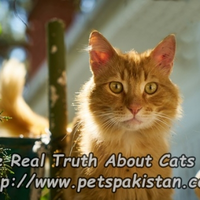 The Real Truth About Cats