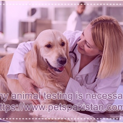 Why animal testing is necessary